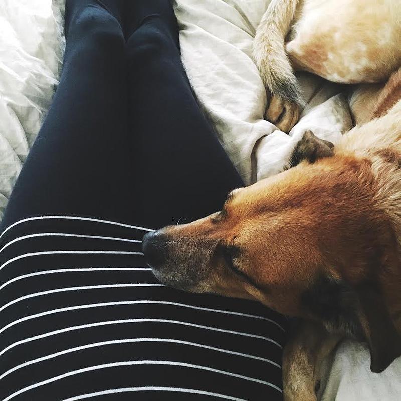 doggie snuggles