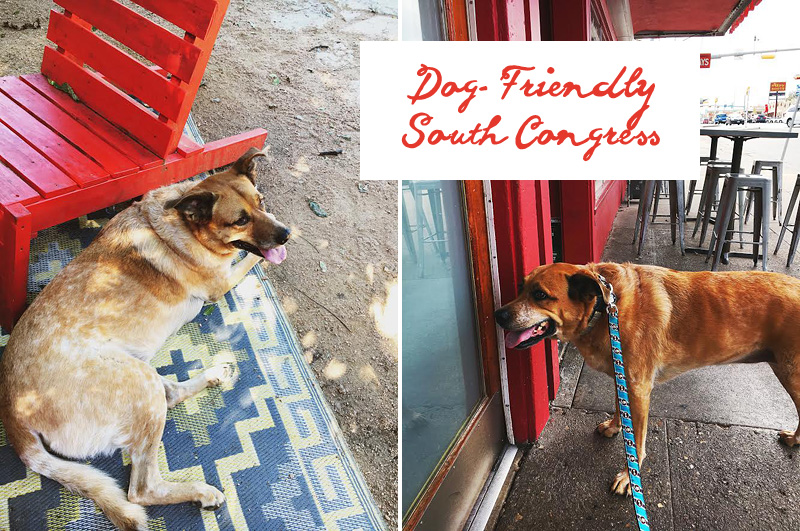 dog friendly south congress