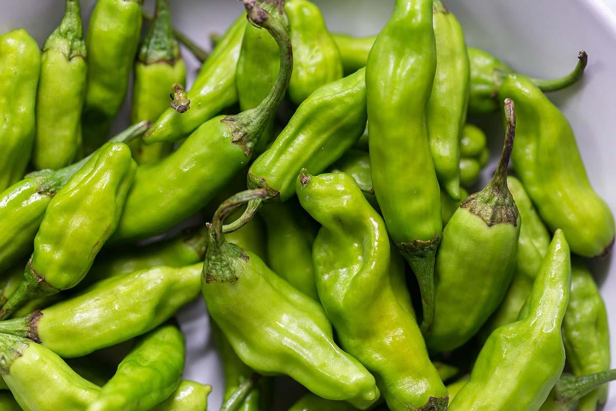 raw shishito peppers